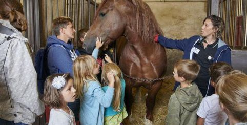 animations automne haras national hennebont